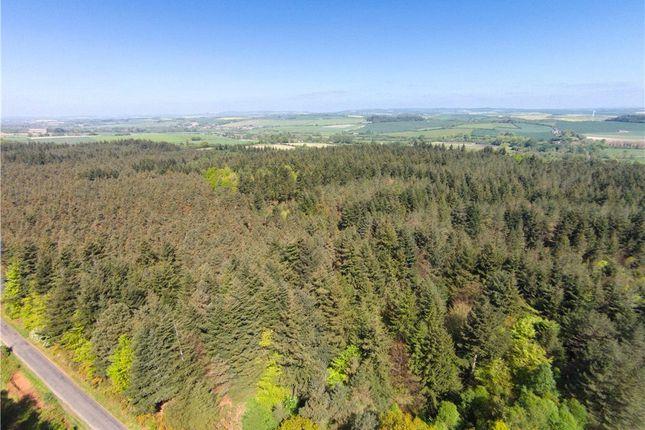 Thumbnail Land for sale in Blackdown House Farm, Briantspuddle, Dorchester, Dorset
