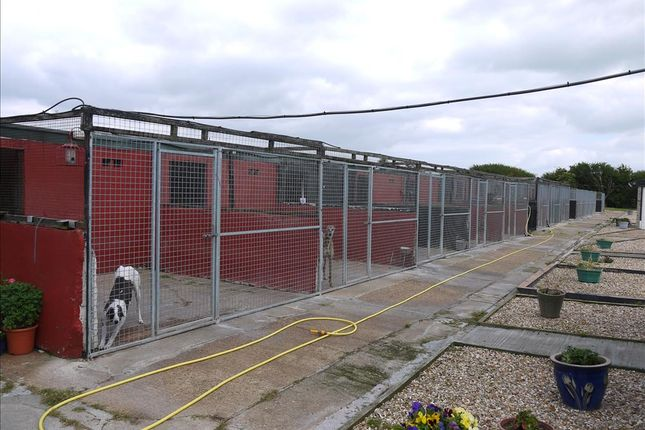 Thumbnail Property for sale in Kennels, Cattery & Equestrian Businesses DN37, Brigsley, North Lincolnshire
