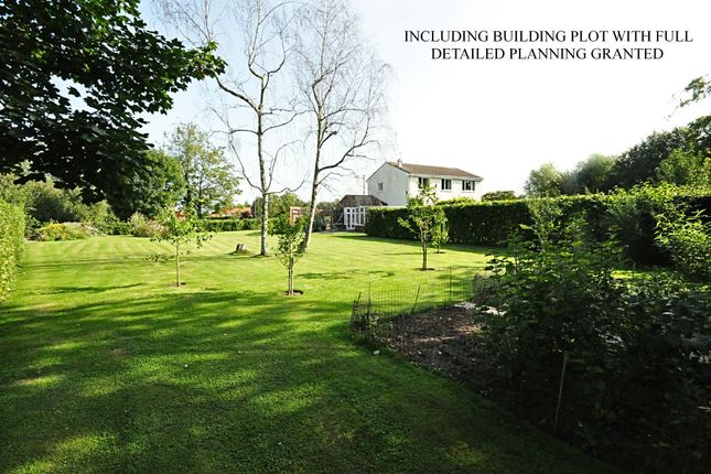 Thumbnail Detached house for sale in Long Green, Wortham, Diss