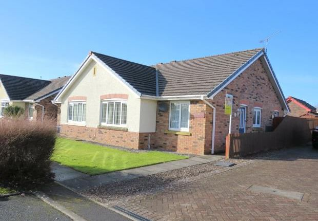 Thumbnail Semi-detached bungalow to rent in The Beeches, Maryport, Cumbria