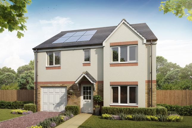 """Thumbnail Detached house for sale in """"The Whithorn"""" at Newfield Gardens, Stonehouse, Larkhall"""