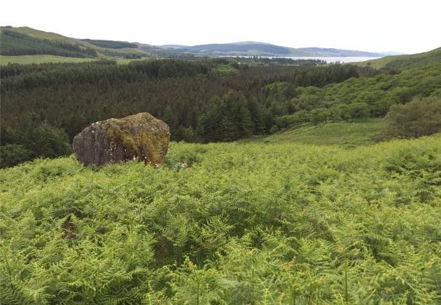 Thumbnail Land for sale in Glen Forsa Forest, Isle Of Mull, Argyll And Bute