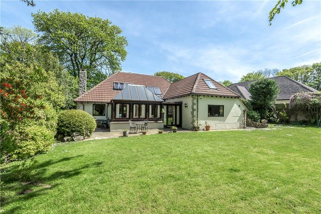 Thumbnail Detached bungalow for sale in Woodside Close, Crewkerne Road, Axminster, Devon
