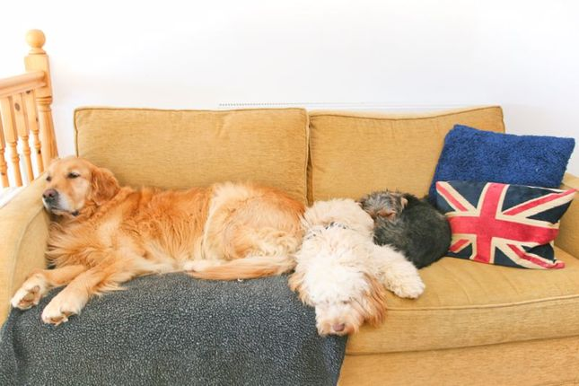 Dogs On Sofa of Esplanade, Ventnor PO38