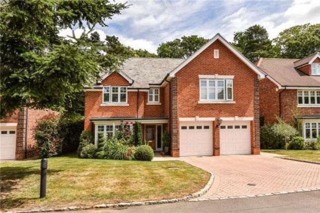Thumbnail Detached house for sale in Chapel Pines, Camberley, Surrey