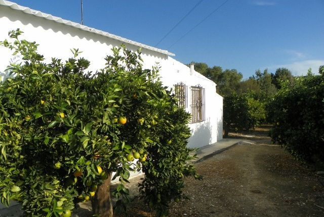 House And Fruit Trees
