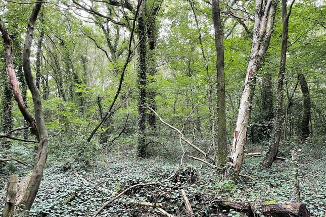Thumbnail Land for sale in Land Whiteland Wood, Sedlescombe, Battle, East Sussex