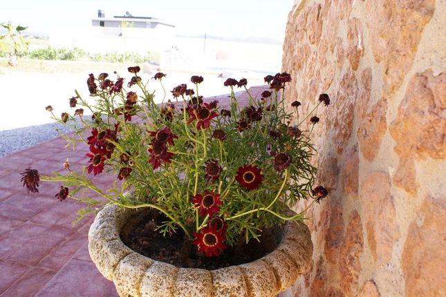 Image28 of Pinoso, Alicante, Spain