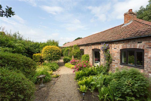 Thumbnail Bungalow to rent in Skelton Lane, Wigginton, York