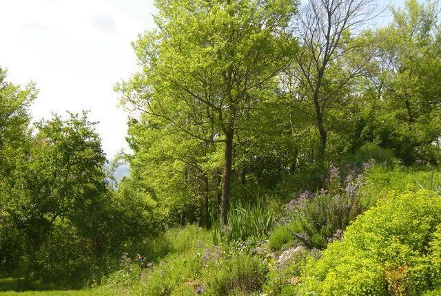 Spring Garden of Casa Nascosta, Preggio, Umbria