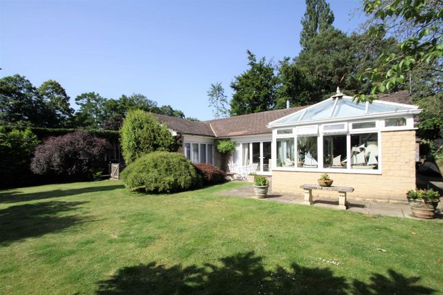 Thumbnail Bungalow for sale in Aldersey Road, Guildford
