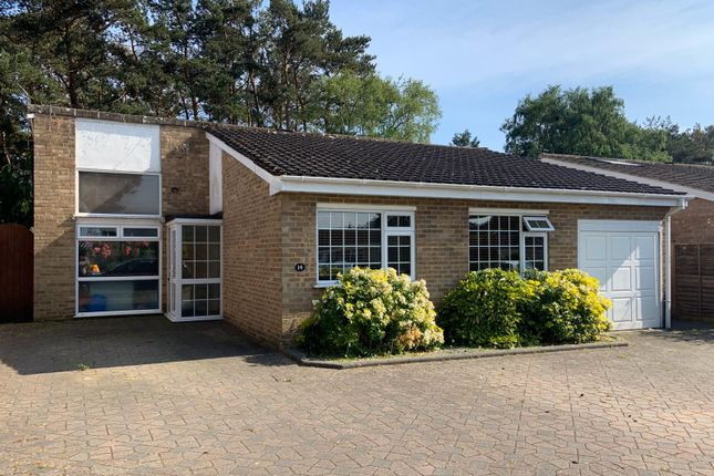 Thumbnail Detached bungalow to rent in Ivy Close, St. Leonards, Ringwood