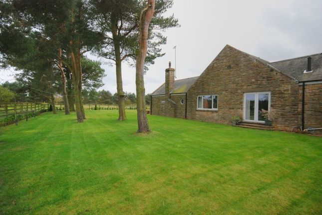 Thumbnail Detached bungalow for sale in Felton, Morpeth