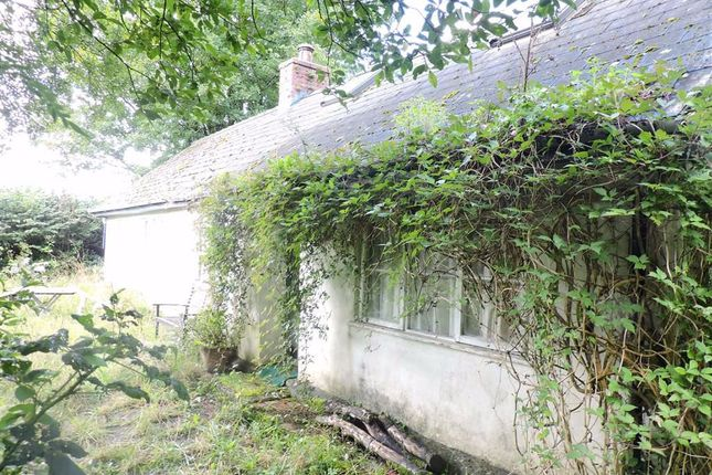 Thumbnail Detached bungalow for sale in Hebron, Whitland, Carmarthenshire