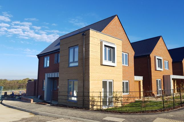 Thumbnail 3 bed detached house to rent in Ash Drive, West End