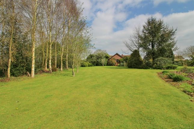 Thumbnail Bungalow for sale in Lily Lane, Aldeby, Beccles