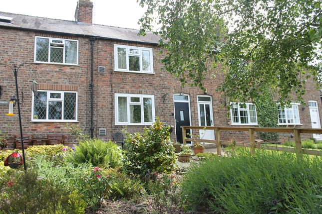 Thumbnail Terraced house for sale in The Green, Tollerton, York