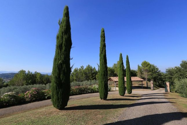 Drive Gates And Cypresses