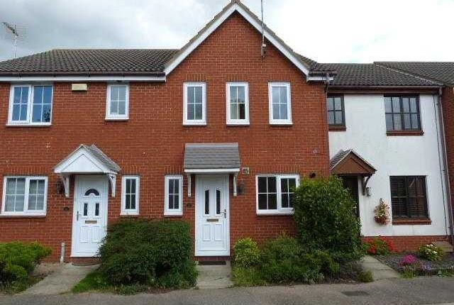 Thumbnail Terraced house to rent in Brights Walk, Kesgrave, Ipswich
