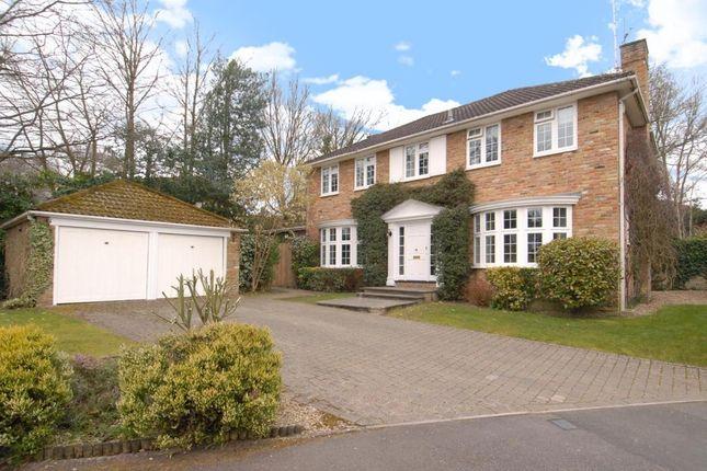 Thumbnail Detached house to rent in Walton Drive, Ascot