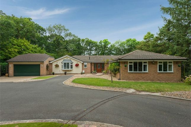 Thumbnail Detached bungalow for sale in Fernhill Lane, New Milton, Hampshire