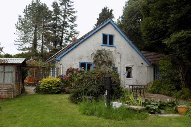 Thumbnail Detached bungalow to rent in Upottery, Honiton