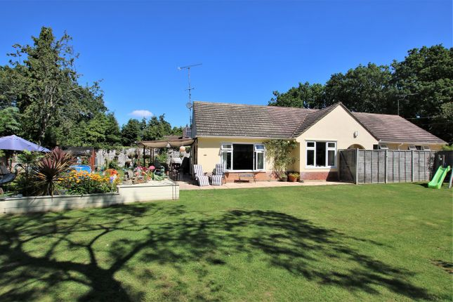 Thumbnail Detached bungalow for sale in Ashley Drive South, Ashley Heath, Ringwood