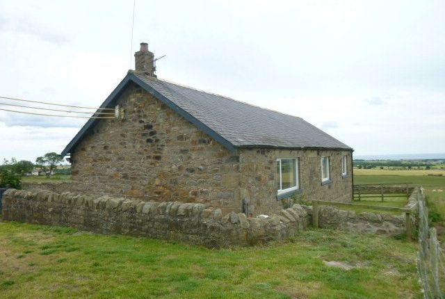Thumbnail Detached bungalow to rent in South East Farm, Shilbottle, Northumberland