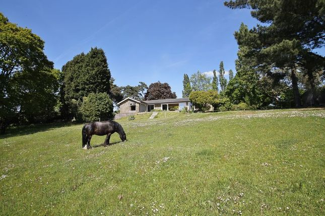 Photo 1 of Spear Hill, Ashington, Pulborough RH20