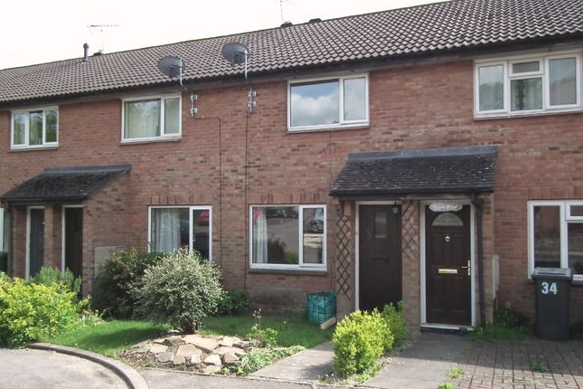 Thumbnail Terraced house to rent in Appledown Close, Alresford, Hampshire