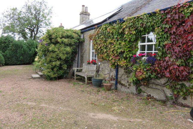 Thumbnail Detached bungalow to rent in Cottage, Greenhead Of Arnot, Fife