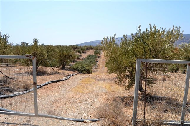 Thumbnail Land for sale in Makrigialos, Lasithi, Gr