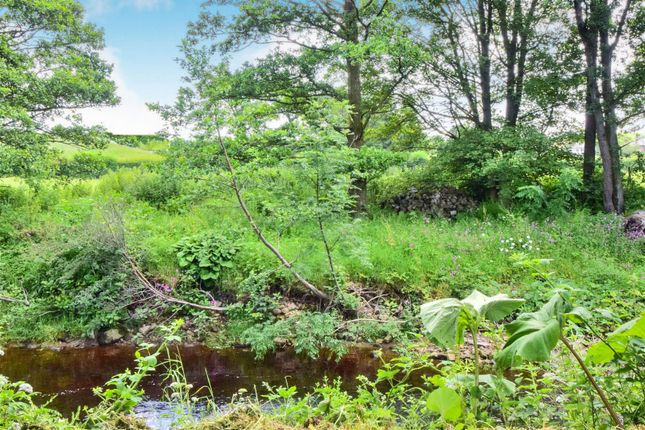 The Beck At The End Of The Garden