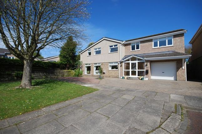 Thumbnail Detached house for sale in Curlew Hill, Morpeth
