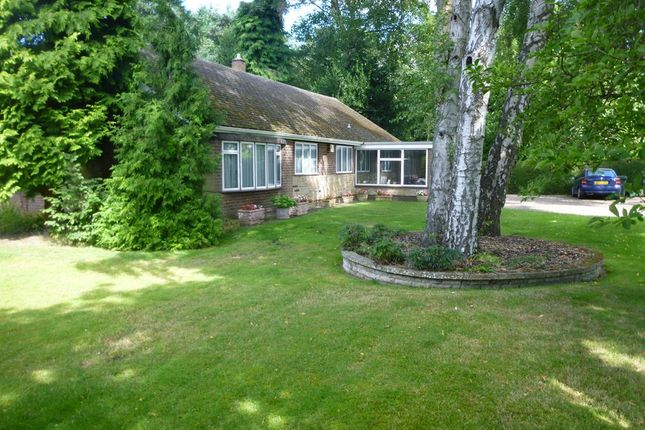 Thumbnail Detached bungalow to rent in Doncaster Road, Bawtry, Doncaster