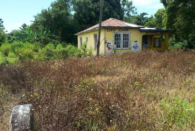 Land for sale in Petersfield, Westmoreland, Jamaica