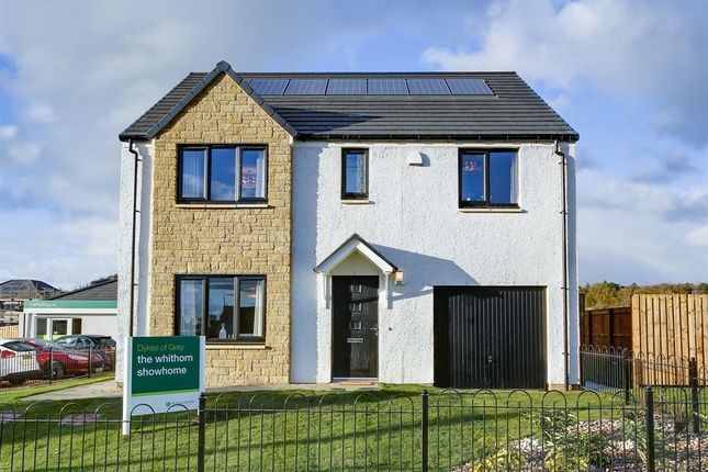 "Thumbnail Detached house for sale in ""The Whithorn"" at Invergowrie, Dundee"