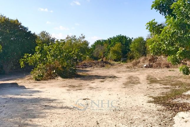 Land for sale in Mesoghi, Paphos, Cyprus