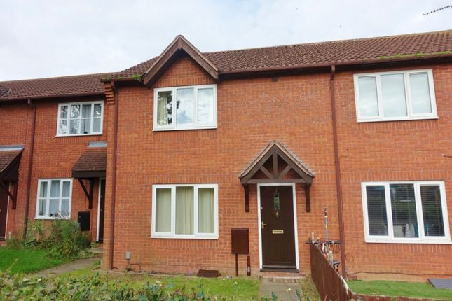 Thumbnail Terraced house to rent in Corsican Pine Close, Newmarket