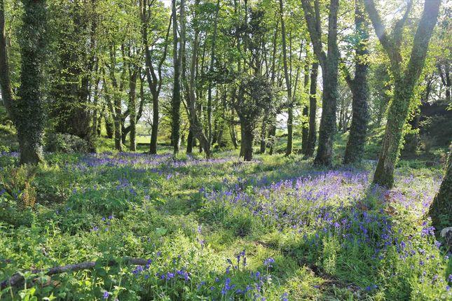 Bluebell Woods of Ty Fry, Rhoscefnhir, Rhoscefnhir LL75