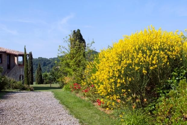 Thumbnail Farm for sale in Castiglione D'orcia, Tuscany, Italy