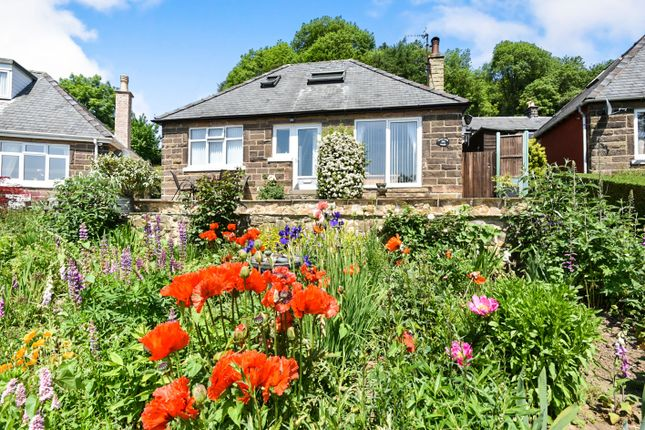Thumbnail Detached bungalow for sale in Sydnope Hill, Two Dales, Matlock