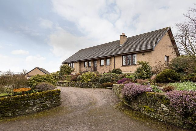 Thumbnail Bungalow for sale in Aberlemno, Forfar, Angus