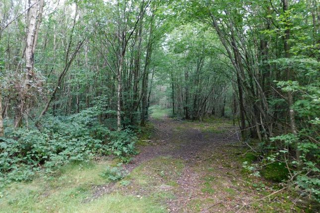 Thumbnail Land for sale in Post Wood, Shadoxhurst Road, Shadoxhurst