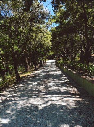 Private Drive of La Garde Freinet, Saint Tropez, French Riviera, 83680