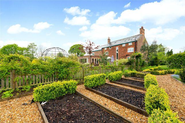 Vegetable Garden of Pickmere Lane, Pickmere, Knutsford, Cheshire WA16