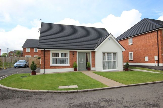 Thumbnail Bungalow for sale in The Harting, Ballycraigy Road, Newtownabbey