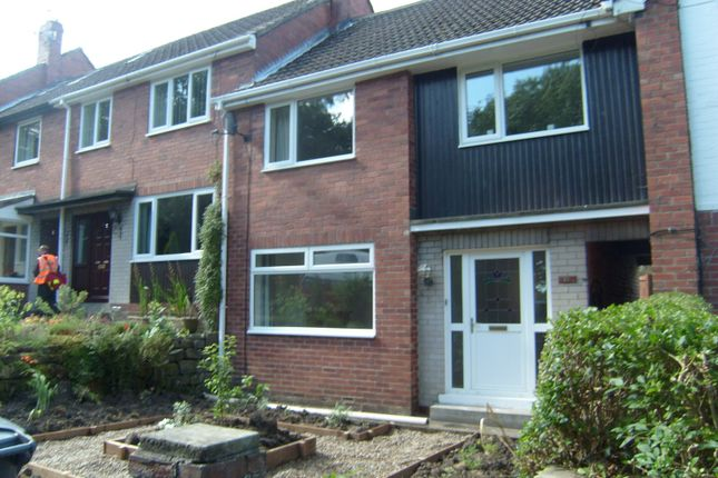 Thumbnail Property to rent in Holly Avenue, Morpeth