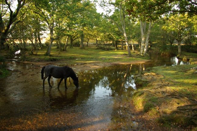 Thumbnail Country house for sale in Near Beaulieu, New Forest National Park, Hampshire