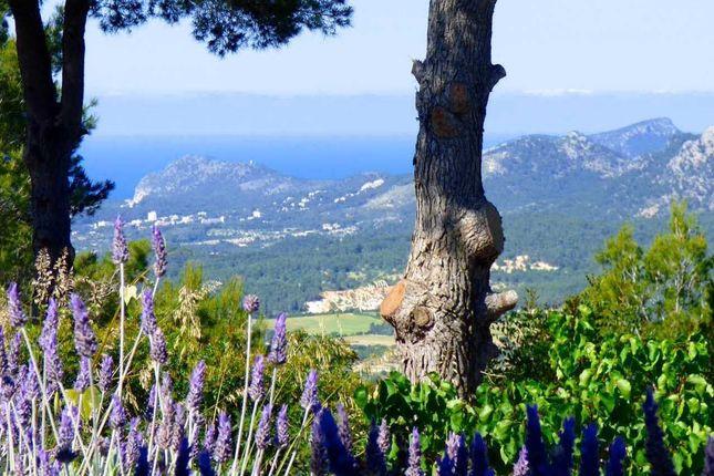 Son Font, Calvià, Majorca, Balearic Islands, Spain
